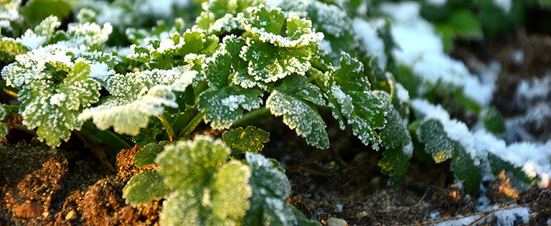 preserver son jardin en hiver