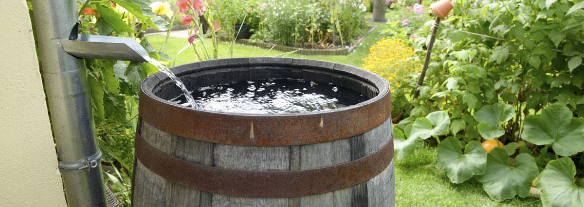 collecteur d'eau de pluie jardin
