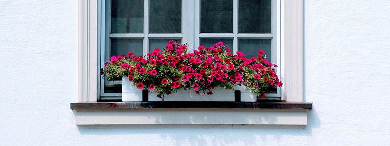 jardinière rectangulaire fenêtre