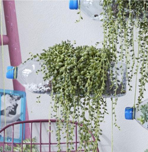 jardiniere suspendu bouteille d'eau