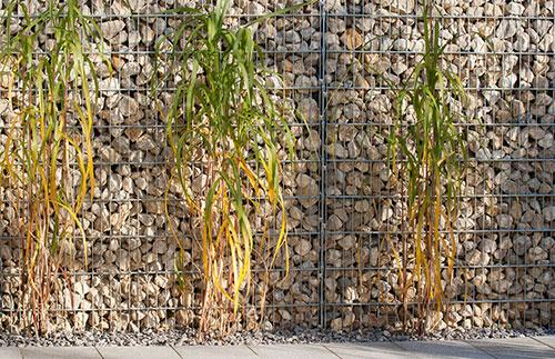 gabion et plantes