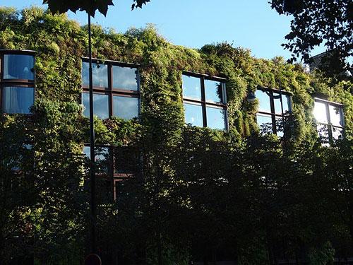 façade végétale verticale