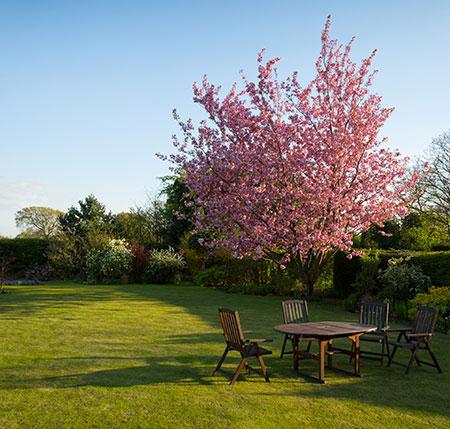 table jardin arbre