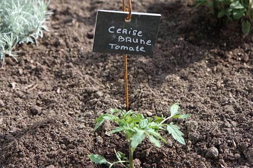 potager carré avec étiquettes légumes