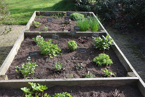 potager legumes carré