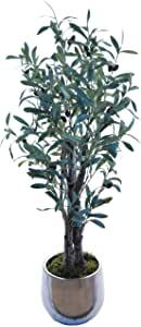 arbre avec des olives intérieur