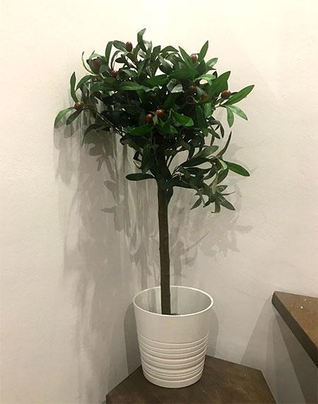 olivier dans un pot artificiel