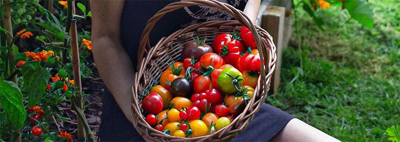 panier de tomates