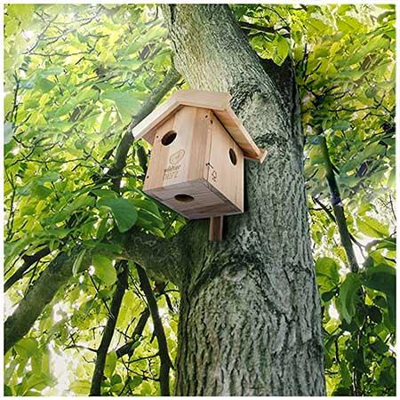 abri pour ecureuil maison