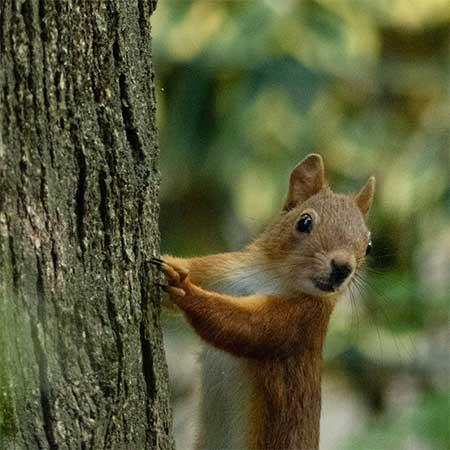ecureuil mignon