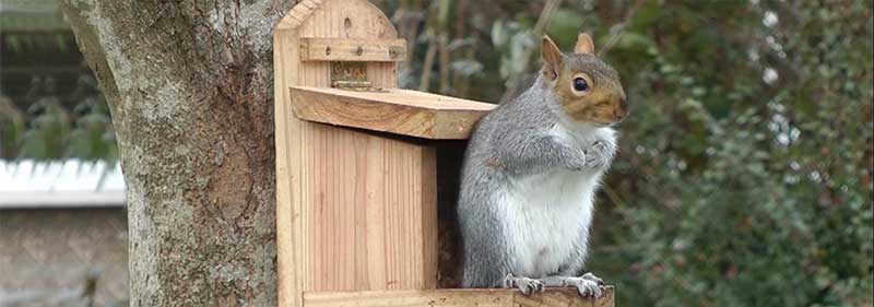 meilleure maison ecureuil