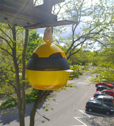 attrape guêpes suspendu à un toit