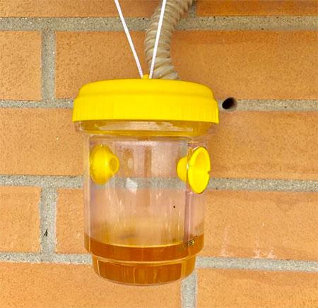 boite pour capturer les insectes